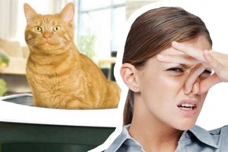 Запах мочи домашних животных во Владимире