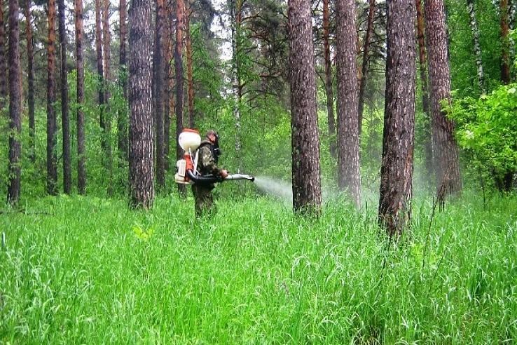 Обработка от клещей лесных массивов во Владимире